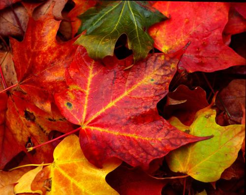 """""""Autumn Leaves"""" by Michael G.O'Callaghan"""