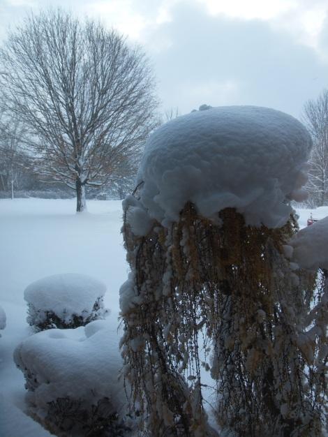 Nov17-18 Snow storm-1