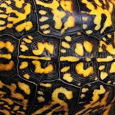 Animal pattern -1