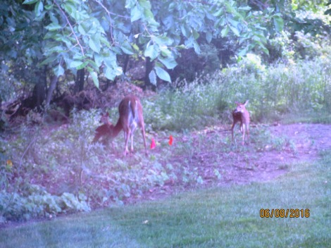 new-fawns-3