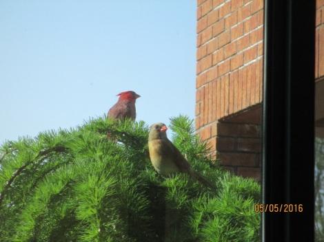 Cardinals - May 2016