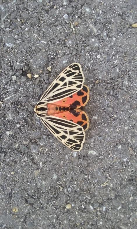 moth-sem-2016