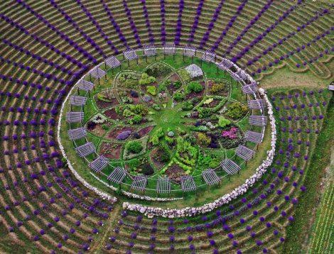 lavendar-garden-shelby