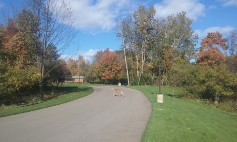 deer-driveway-oct