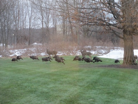 dec-2016-deer-turkeys-2