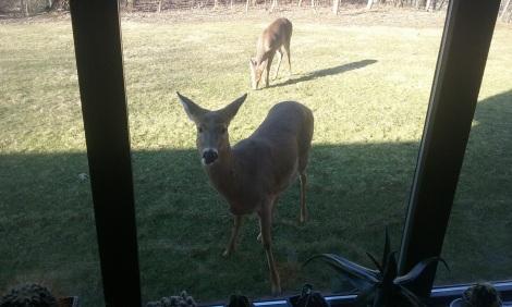 deer-feb-1